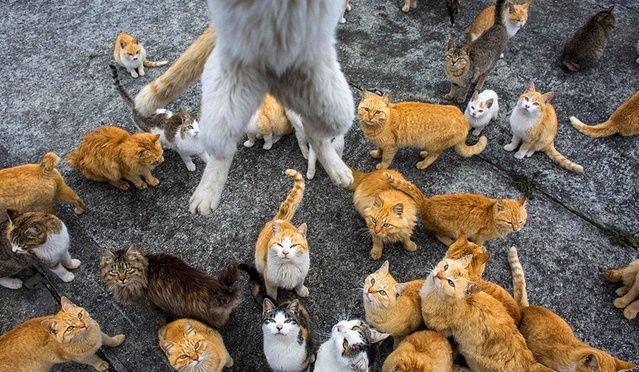 这个地方老鼠成患,引进大量猫咪,如今却成了这样!-金融微周刊