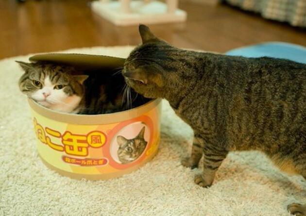 两只猫咪真是塑料姐妹花,可再好的友情也经不起一个窝考验!-金融微周刊