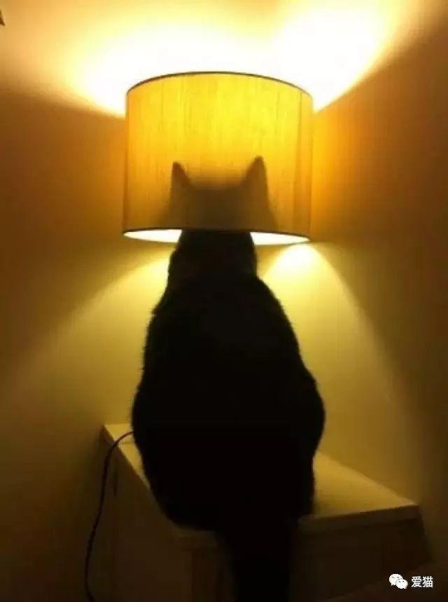 研究称养猫能防癌,好处真太多了!-金融微周刊